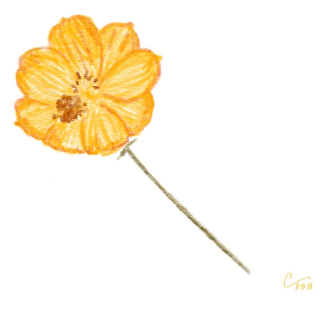 Sketch of a yellow orange cosmos flower