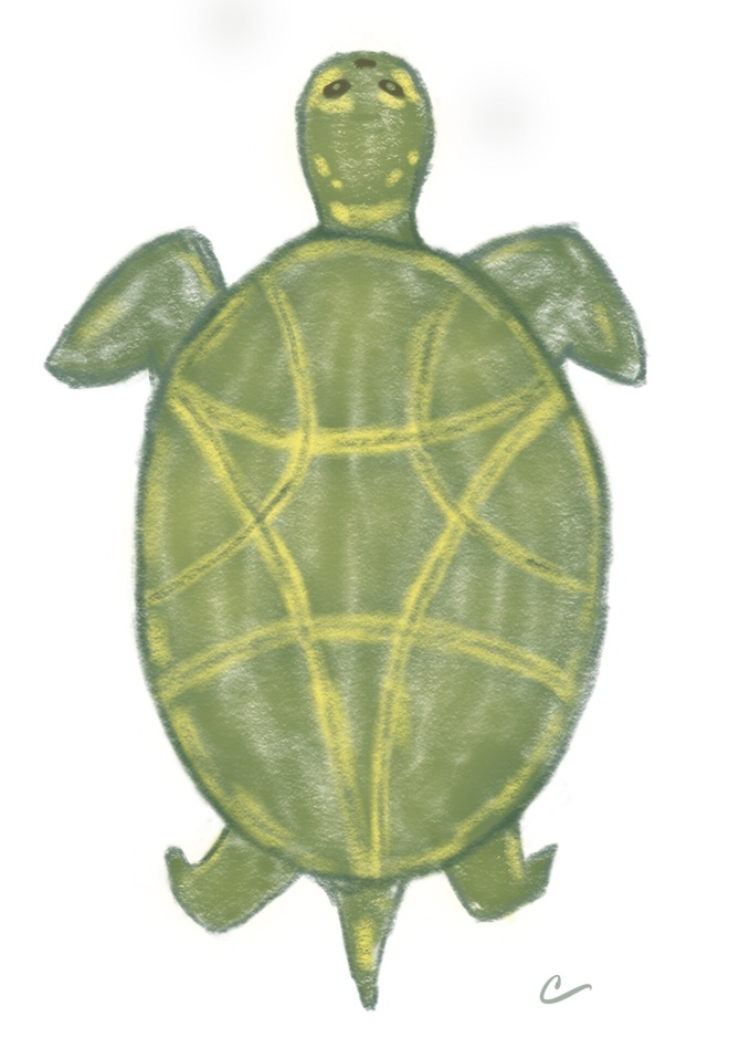 Stylized sketch of a sea turtle