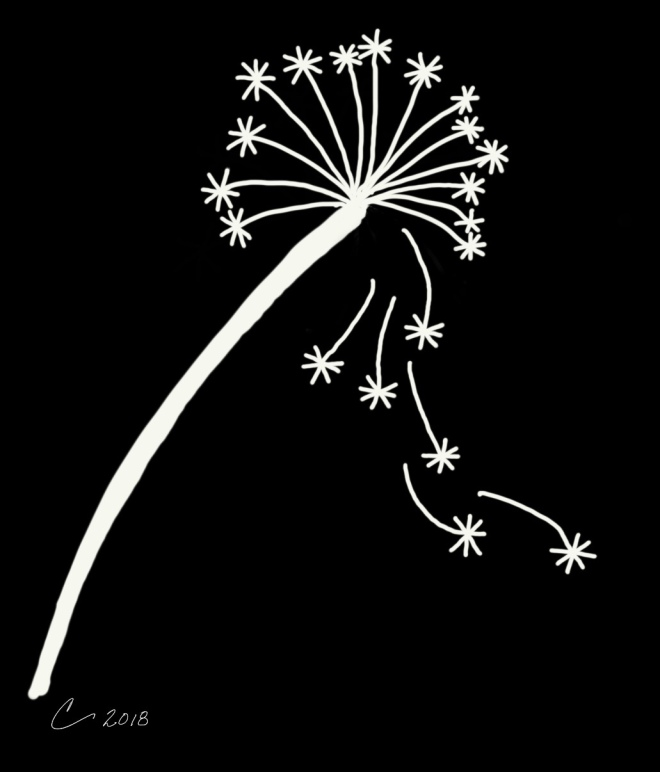 White line drawing of a dandelion on a black background